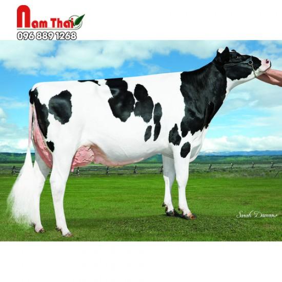 Tinh bò sữa HF - TRIPLECROWN PONTIFF-ET