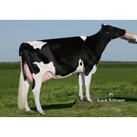 Tinh bò sữa HF - LINERWAY COPAKE