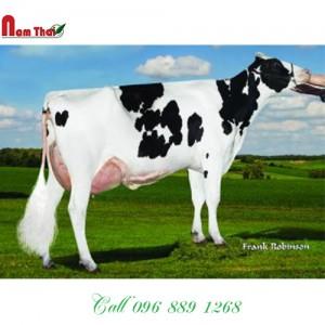 Tinh bò sữa HF Mỹ-  MAPLE-SLOPE SHF DRAGO-P-ET