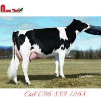 Tinh bò sữa HF - WA-DEL SUPER RENO-ET