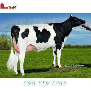Tinh bò sữa HF JOLICAP EMILE-ET