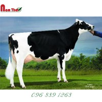 Tinh bò sữa HF Mỹ-DE-SU 11491 FOSTER-TW