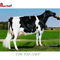 Tinh bò sữa HF - VISION-GEN SHF CAPONE-ET
