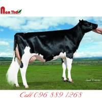 Tinh bò sữa HF Mỹ-RICHMOND-FD EL LOCO-ET