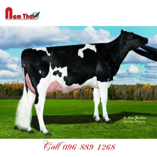 Tinh bò sữa HF Mỹ - BUTZ-HILL MAYHEM-ET
