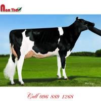 Tinh bò sữa HF Mỹ -  PINE-TREE STOCKLEY-ET