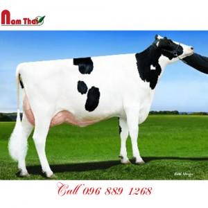 Tinh bò sữa HF - DE-SU 11782 TERRANOVA-ET