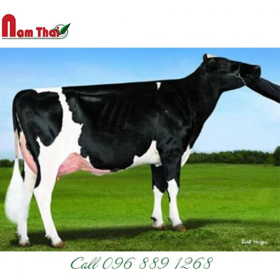 Tinh bò sữa HF - DE-SU 1334 WAMPLER-ET