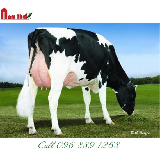Tinh bò sữa HF Mỹ - LARCREST CABALLERO-ET