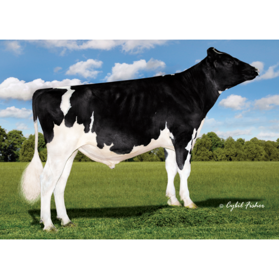 Tinh bò sữa HF - KED ONE SAFELITE-ET - 29HO17617