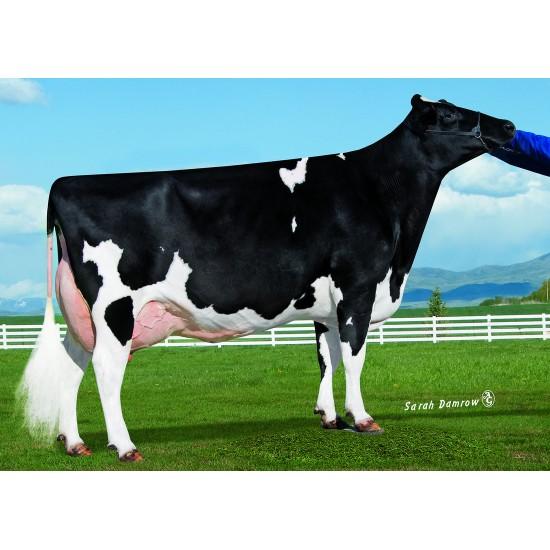 Tinh bò sữa HF - EDG HERCULES-ET- 29HO17613