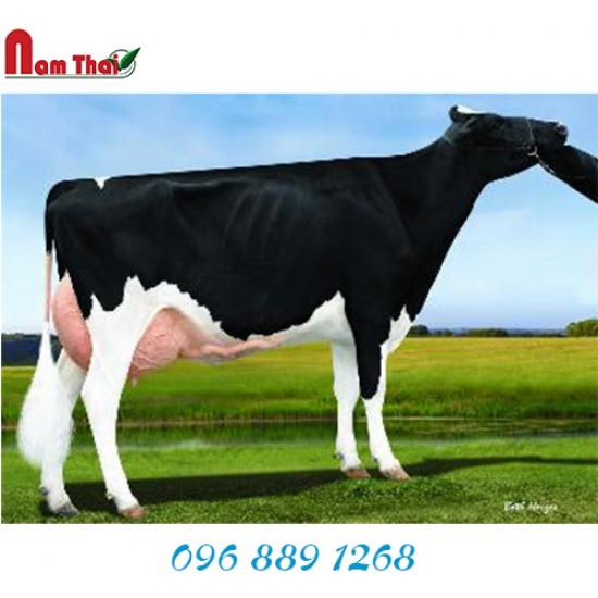 Tinh bò sữa HF - LADYS-MANOR OBS DORADA-ET