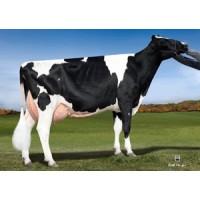 Tinh bò sữa HF - EDDY
