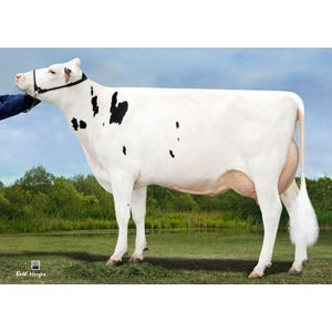 Tinh bò sữa HF phân biệt giới tính - PARADÍSE