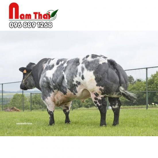 Tinh bò thịt BBB PBGT - ATTRIBUT DU FOND DE BOIS
