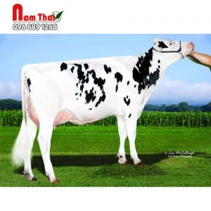 Tinh bò sữa HF - ABS PONTIAC-P-ET