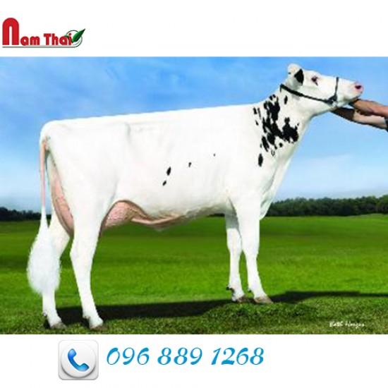 Tinh bò sữa HF - REGANCREST-KF OBSV BRONO-ET