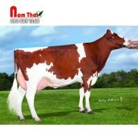 Tinh bò sữa HF - ZIMMERVIEW RUSH-PP-ET