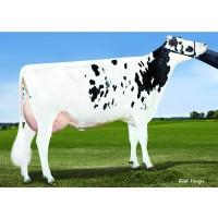 Tinh bò sữa ABS TERROR