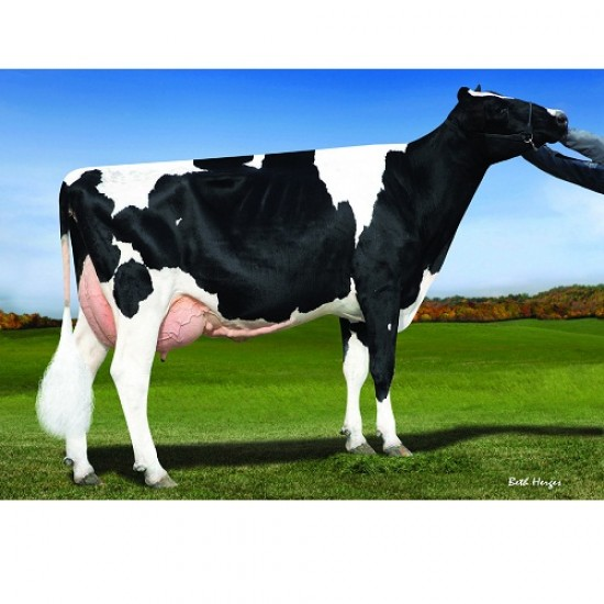 Tinh bò sữa sandy - valley MR EDDY