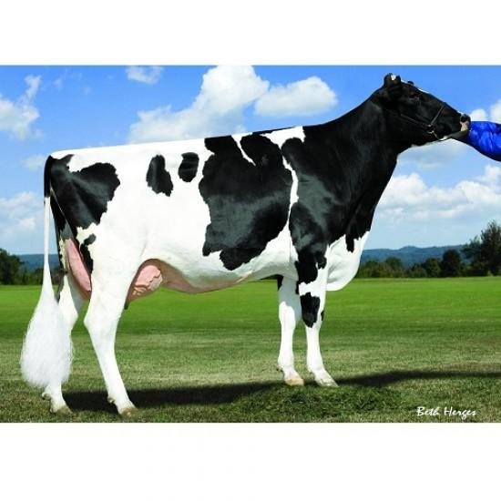 Tinh bò sữa HF - SIXTO