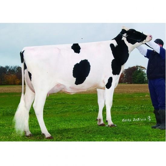 Tinh bò sữa HF - ENLIGHTEN