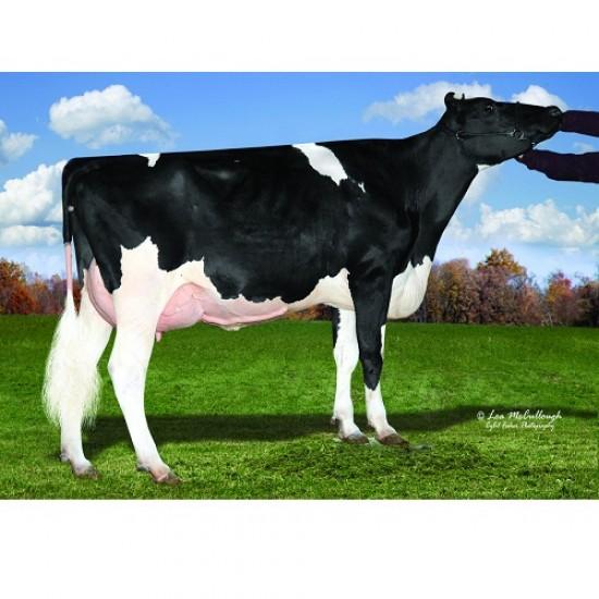 Tinh bò sữa HF - LIVIO