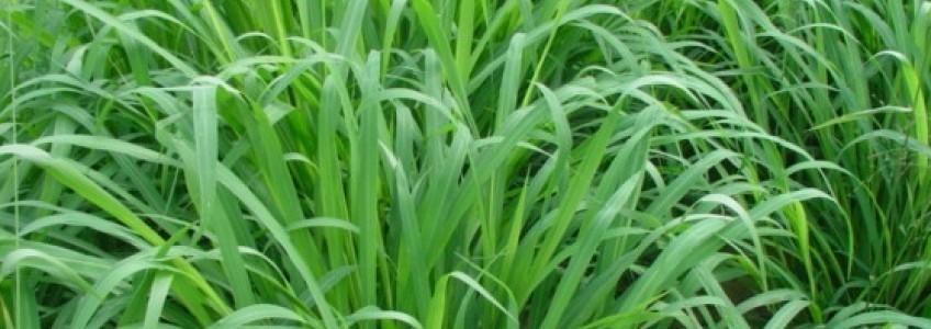 Chăn nuôi hướng đi mới cho nông nghiệp