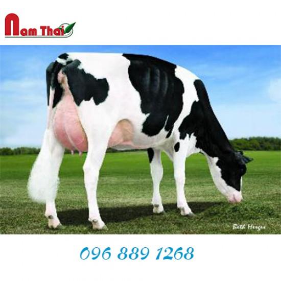 Tinh bò sữa HF - BUTZ-HILL MOOGENE-ET