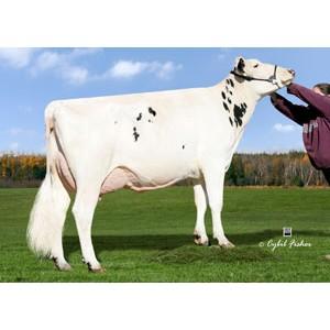 Tinh bò sữa HF -COPPERTOP DOBERMAN-ET