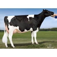 Tinh bò sữa HF -PINE-TREE SUZY PLUMBER-ET