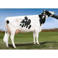 Tinh bò sữa HF - GEHRKE JOHANSSON EP DION-ET