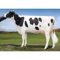 Tinh bò sữa HF -  PINE-TREE PLANET MUSTER-ET