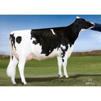 Tinh bò sữa HF - JAFRAL BOGIE CASPER-ET