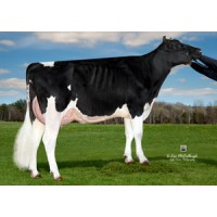 Tinh bò ABS - Vision-Gen SHF Anderson ET