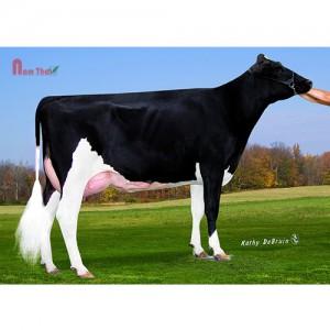 Tinh bò sữa HF - CO-VISTA GERARD ARMANI-ET