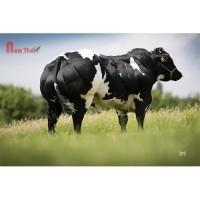 Tinh bò thịt BBB - Dodou De St. Remacle