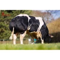 Tinh bò thịt BBB - KASSTAAR