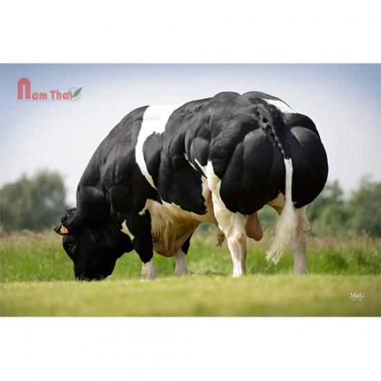 Tinh bò thịt BBB - LANGOUREUX DE FOOZ